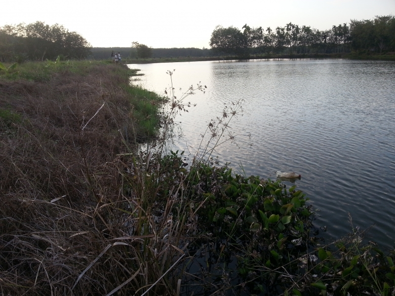 Fishing Site